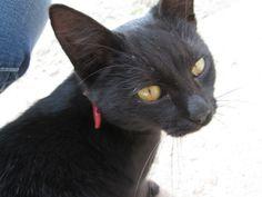 #lovemycat #blackcat