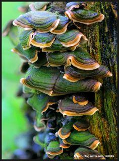 Colorful Bracket Fungi