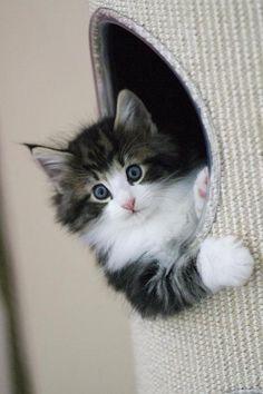 Beautiful kitten....