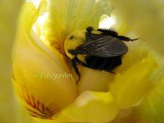 sleeping bee, wings folded