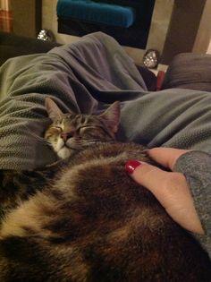 Precious kitten.