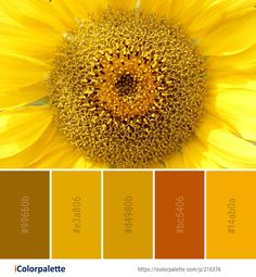 Color Palette Ideas from Sunflower Flower Yellow Image