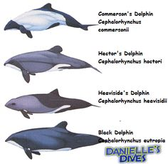 group3 dolphin types