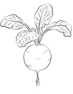 Red Radish coloring page from Radish category. Select from 31983 printable crafts of cartoons, nature, animals, Bible and many more. Free Printable Coloring Pages, Coloring Pages For Kids, Coloring Books, Art Drawings For Kids, Easy Drawings, Vegetable Crafts, Vegetable Coloring Pages, Vegetable Pictures, Tree Wall Art