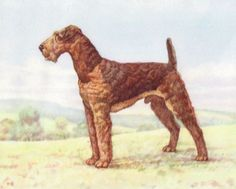 VINTAGE ANIMAL LITHO CANINE AIREDALE TERRIER DOG PUPPY PUP OLD PC POSTCARD