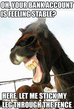 - Horses Funny - Funny Horse Meme - - The post appeared first on Gag Dad. Funny Horse Memes, Funny Horses, Cute Horses, Pretty Horses, Beautiful Horses, Funny Animals, Horse Humor, Animal Memes, Funny Horse Pictures