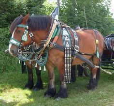 Rhineland Heavy Draft Horse Breed Details - Pics, Size, Uses, Traits