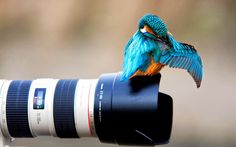 The animal photography career offers you with the good salary and the great sacrifice to stay put in certain condition where you have to capture the very best pictures. Photography Career, Camera Photography, Animal Photography, Amazing Photography, Digital Photography, Photography Wallpapers, Professional Photography, Image Photography, Wildlife Photography