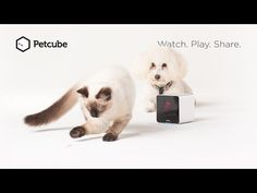 Petcube: Remote Wireless Pet Camera | Pet Monitor System
