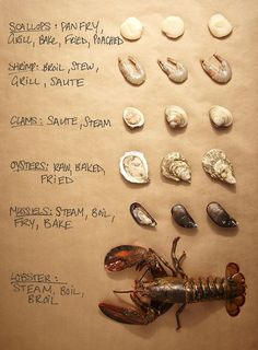 Use this shellfish cheat sheet to help determine what's fresh next time you're at the seafood counter. Not that I'll be buying any of this ever, especially in Nebraska. Seafood Dishes, Fish And Seafood, Cooking 101, Cooking Recipes, Fish Recipes, Seafood Recipes, Pescatarian Diet, Food Charts, Culinary Arts