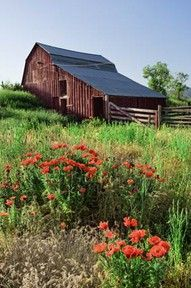 Eastern Idaho ~ days bring wildflowers and tall grasses. Homesteaders along the Oregon Trail began settling productive farmlands and building barns like this one in the northern Rockies in droves around 1843, pursuing the romance, abundance, and a better life.