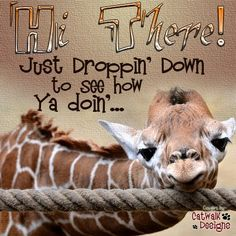 tired little giraffe Animals And Pets, Baby Animals, Funny Animals, Cute Animals, Wild Animals, Giraffe Art, Cute Giraffe, Giraffe Quotes, Giraffe Pictures