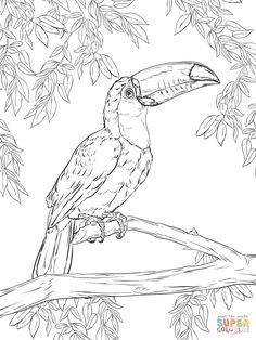 Toco Toucan coloring page | SuperColoring.com