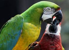 34 Stunning Pictures Of Exotic Birds Love Birds, Beautiful Birds, Pink Cockatoo, Exotic Birds, T Rex, Bird Feathers, Snuggles, Cute Animals, Creatures