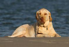 Brandy At The Beach by Scott Helfrich, via 500px