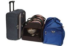 """Many airlines allow travelers to carry a pet on a plane as long the animal's carrier fits within set size limits. When flying, you'll want an airplane-approved cat carrier, and you'll also want to check with your airline for its rules and regulations regarding flying felines. (Pay attention to breed restrictions, too. American Airlines, for example, prohibits brachycephalic, or """"snub-nosed,"""" cat breeds like Persian cats, since they may have trouble breathing on planes.)"""