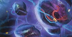 Cientistas mudam DNA de embriões humanos pela 1ª vez nos EUA com nova técnica de edição genética