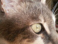 My cat Tozlu,by Semra Taner