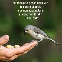 almeno non ferirli! Osho, Winston Churchill, Native American Quotes, Good Morning Inspirational Quotes, Italian Quotes, Richard Gere, Italian Language, Spiritual Path, Dalai Lama