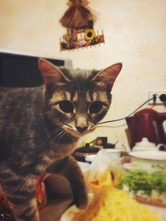my cute cat Paskha (Easter) Моя милая кошка Пасха