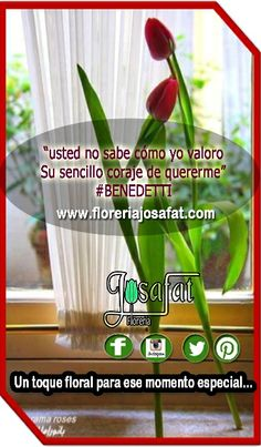 """usted no sabe cómo yo valoro Su sencillo coraje de quererme"" #BENEDETTI  ""You do not know how I value Its simple courage to love me "" #Benedetti  www.floreriajosafat.com @Florería Josafat #floreriajosafat"
