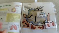 This year try giving new pedagogical techniques a go! Here's a quick example of a foldable I use to help teach about alveoli Science Notes, Science Topics, Science Notebooks, Science Activities, Biology Teacher, Teaching Biology, Help Teaching, Biology Lessons, Science Lessons