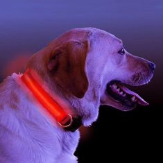 LED Light Up Dog Collar. Provide safety for your dogs and pets. Best for night walking. Walk Your Pet Safely and Be Seen. Light up dog collar Yorkshire Terrier, Pitbull, Dog Lover Gifts, Dog Lovers, Cute Baby Animals, Funny Animals, Cute Puppies, Dogs And Puppies, Led Dog Collar