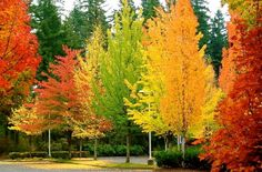 501ed209cc39d83b3d8db98e210d85c2 20 Amazing and Colorful Autumn Photos
