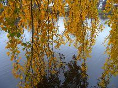 'Herbst am Alsterlauf 3' von hamburgart bei artflakes.com als Poster oder Kunstdruck $19.41