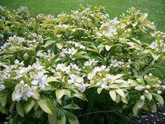 FOTO #3: Další krásné a voňavé květiny – G.cz Shrubs, The Good Place, Wordpress, Country, Places, Rural Area, Shrub, Country Music, Lugares