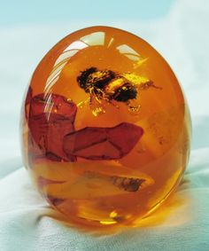 awesome Bumble Bee in Amber, Life is a miracle, take care of others is a most, go green ...