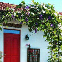 Povijník nachový neboli ipomea, modré nebe a naše dveře přinášející do domu štěstí, kterým sekunduje rudá buganvílie. Tu budeme muset na zimu schovat, povijník uschne a opadá, ale já si tuhle letní krásu budu pamatovat i v prosinci. #zahrada #nepraktickahospodynka