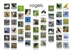 vogels, afkijkplaat