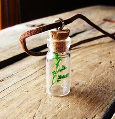 """This tree in a jar necklace seems like a sweet parting gift. Stirs up poetic imagery for me - Something you can carry with you always that's a piece of """"home""""."""