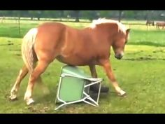 Funny Horse Videos Compilation 2014 [NEW] - http://positivelifemagazine.com/funny-horse-videos-compilation-2014-new/