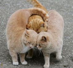 Three's company and true love.