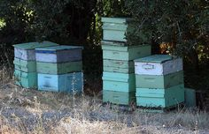 Beehives from the French Laundry