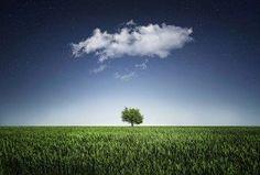 Cloud in sky over tree in grass  #flychord #flychordpiano