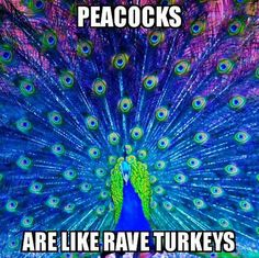 Rave Turkeys