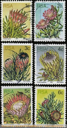SA stamps Stamp Collection Value, Postage Stamp Collection, Protea Art, Protea Flower, African History, African Art, South Africa Holidays, Vintage Travel Wedding, Australian Plants