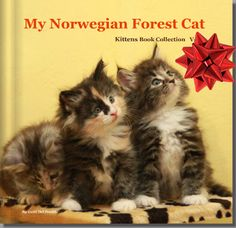 """My Cats book """"my Norwegian forest cat"""""""