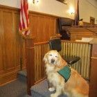 It was a ground breaking day in 2011 in a New York court room as Rosie entered and took her seat beside the witness. It was the first time a service dog was permitted to assist a witness while testifying in New York State, and Rosie did a wonderful job.