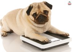 Weight Waggers - a great story to understand why Kibble and Treats are not good for your dog. #dog #health #food