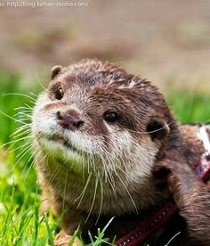 26 best a otter s to paint images in 2019
