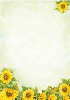 léto, květiny, slunečnice