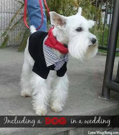 Including a Dog in a Wedding: The BEST Day EVER! - Come Wag Along #weddingdogs #doginwedding #wedding