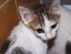 LEIA - Gato adoptado - Asoka el Grande