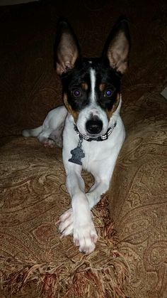 My rat terrier                                                                                                                                                                                 More