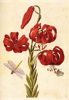 Maria Sibylla Merian 2 April 1647 – 13 January 1717.