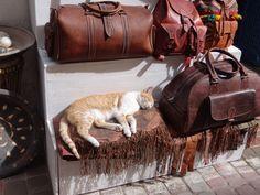 https://flic.kr/p/E9EWam   Hundel, Esel, Katzen, Lederwaren   in der Medina von Essaouira.
